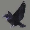 10 36 12 756 crow 01 4