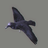 10 36 13 291 crow 03 4