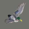 10 39 45 355 duck 02 4