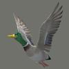 10 39 45 356 duck 06 4