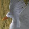 10 39 45 754 duck white 01 4