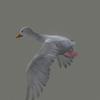 10 39 46 154 duck white 06 4