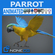 Animated Parrot 3D Model