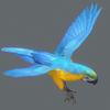 10 53 05 360 parrot 0003 4