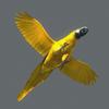 10 53 05 381 parrot 0005 4