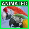 10 53 06 738 parrots 2 4