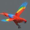 10 53 06 93 parrot2 0003 4
