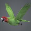 10 53 07 269 parrotwild 06 4