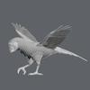 10 53 07 274 parrotwild 07 4