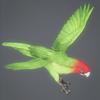 10 53 07 35 parrotwild 03 4