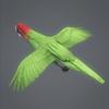 10 53 07 46 parrotwild 04 4