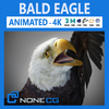 13 41 17 616 eagle bald 00 thumb 4