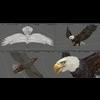 18 43 15 125 eagle bald 006 mayaui 4