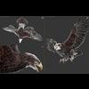 18 47 02 971 002 eagles b 4