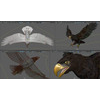18 47 03 77 006 eagles b 4