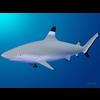 18 05 07 237 shark 1 4
