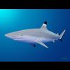 18 05 51 385 shark 2 4