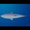 18 05 56 433 shark 6 4