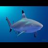 18 06 03 46 shark 4 4