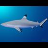 18 06 03 592 shark 8 4