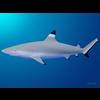 18 06 08 226 shark 9 4