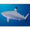 18 06 10 538 shark 5 4