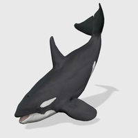 Killer Whale Animated 3D Model