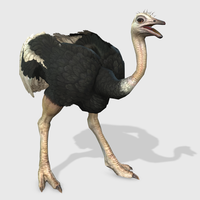 3D Ostrich Animated 3D Model