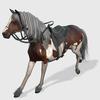 21 34 47 394 horsdisplaypic4kby4k 4
