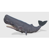 00 33 02 40 sperwhalepic1 4
