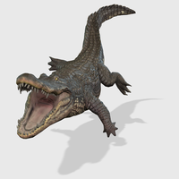 3D Alligator Animated 3D Model