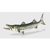01 17 24 402 barracudapic1 4