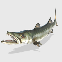 3D Barracuda Animated 3D Model