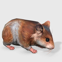 3D Hamster Animated 3D Model