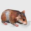 08 49 03 876 hamsterdisplaypic4kby4k 4