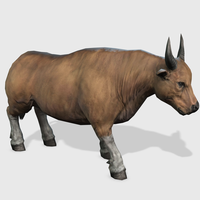 3D Banteng Bull Animated 3D Model