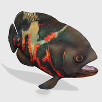3D Oscar Fish Animated 3D Model