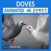 19 51 52 429 doves thumb 4