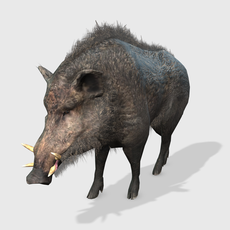 3D Wild Boar Animated 3D Model