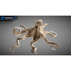 07 27 55 188 octopus 021 4