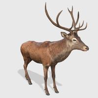 Deer Animated 3D Model