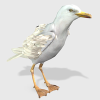 Seagull Animated 3D Model